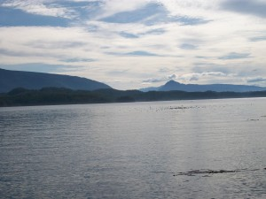 Calm morning waters on the Johnstone Strait