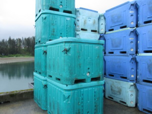 Ice-packed salmon ready to be flown to Anchorage and Seattle from Yakutak